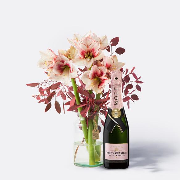 Amaryllis Showmaster 3 Stiele mit Champagner Moët Rosé