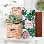 Echeveria in a Box mit Schokolade von Herzen