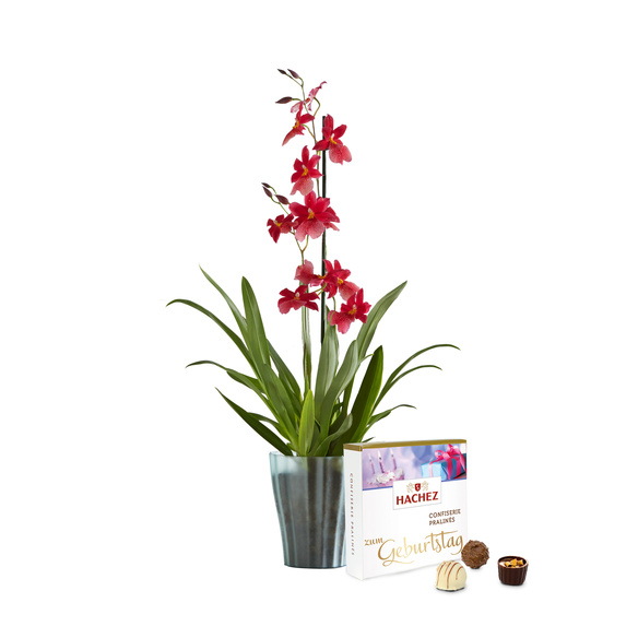 Orchidee Bon Moment mit Hachez zum Geburtstag