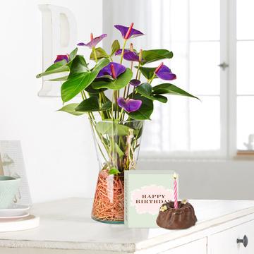 anthurie water plant mit schokoladentafel sch n dass es dich gibt. Black Bedroom Furniture Sets. Home Design Ideas