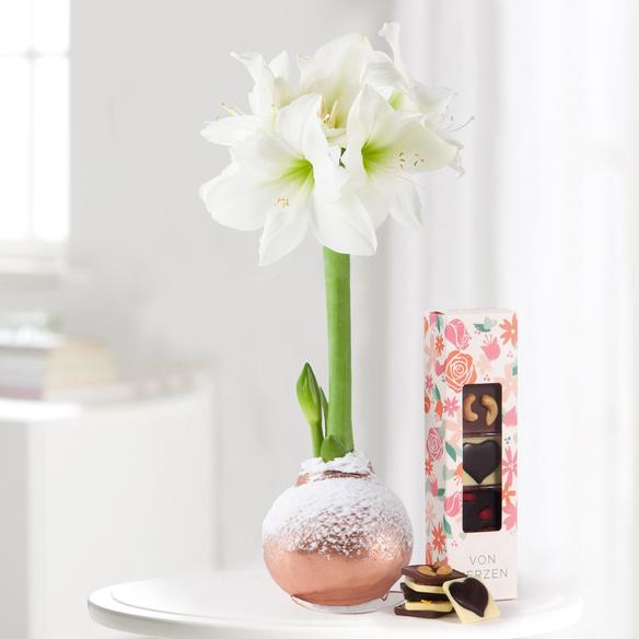 Amaryllis No-Water in Weiß mit Schokoladentäfelchen