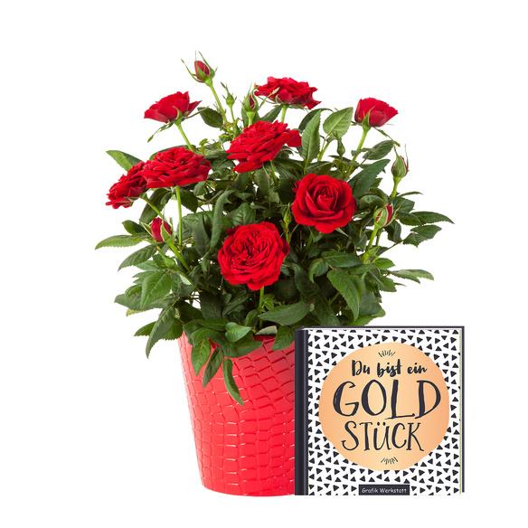 Topfrose in Rot mit Buch Du bist ein Goldstück