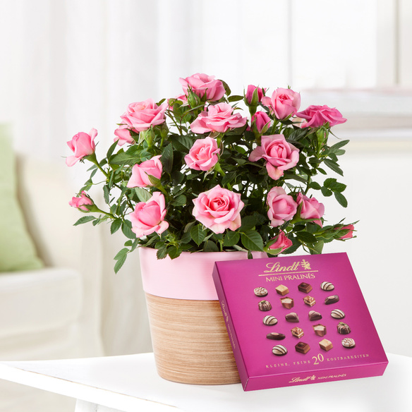 Topfrose in Rosé mit Lindt Mini Pralinés