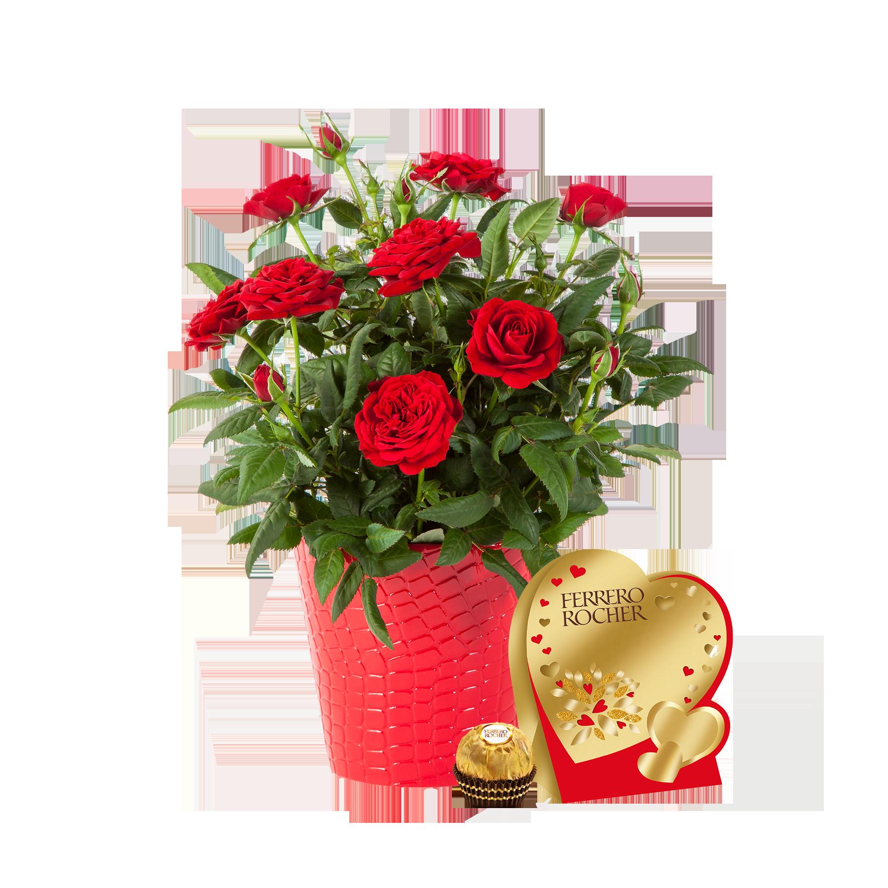 Topfrose in Rot mit Ferrero Rocher Herz