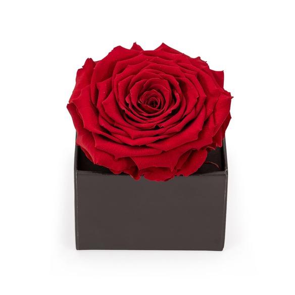 Geschenkset  Ewige Rose in edlem Rotton