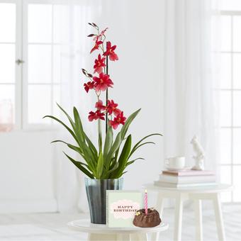 Orchidee Bon Moment mit Geburtstagsküchlein mit Kerze