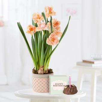 Apricot Whirl Narzissen mit Geburtstagsküchlein