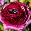 Blumenstrauß  Happy Birthday to You mit Schriftzug Das beste Alter ist jetzt