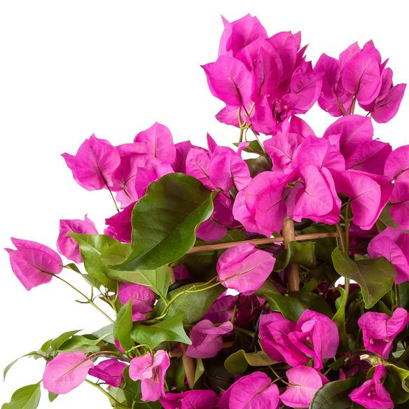 Blütenzauber mit Lindt Mini Pralinés