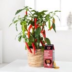 Peperoni im Korb mit Käsecracker mit Chili