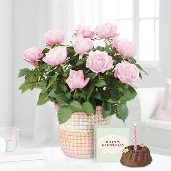 Topfrose in Rosé mit Geburtstagsküchlein mit Kerze