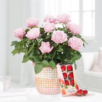 Topfrose in Rosé mit Danke Mama Nougatherzen
