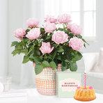 Topfrose in Rosé im Flechtkorb mit Geburtstagsküchlein