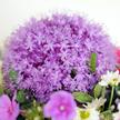 Blumenstrauß  Sommergefühle Größe M mit Popcorn