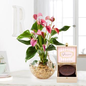 Flamingoblume Water Plant in Pink mit Mini Sachertorte