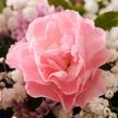 Blumenstrauß  Alles Liebe mit Vaux Rosé Sekt brut