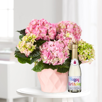 Hortensie in Rosa mit Piccolo Happy Birthday