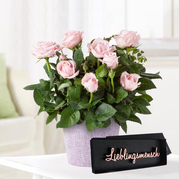Topfrose in Rosa mit Schriftzug Lieblingsmensch