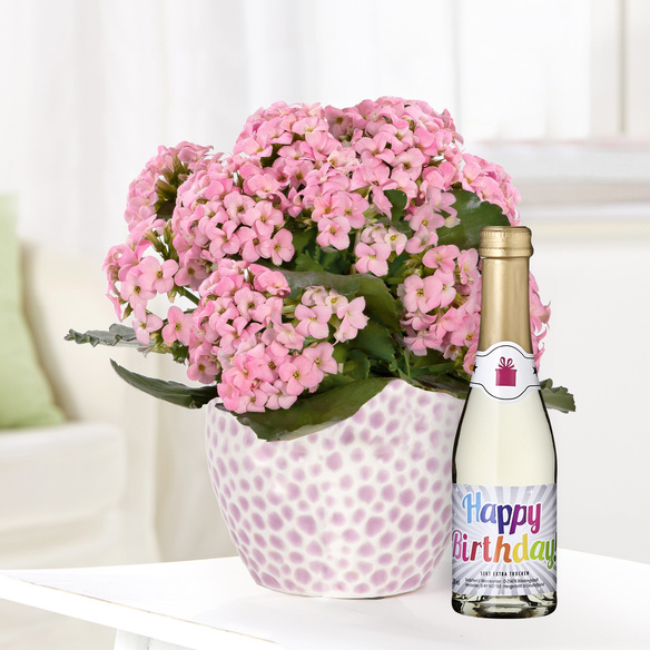 https://static.blume2000.de/pictures/101480/022_Kalanchoe-in-Rosa-mit-Piccolo-Happy-Birthday.jpg
