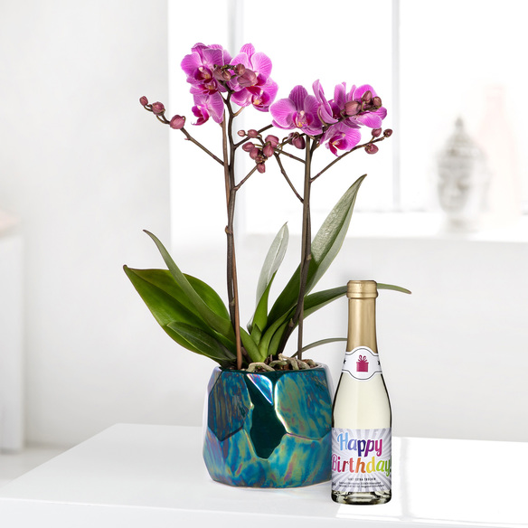 Orchidee in Violett mit Piccolo Happy Birthday