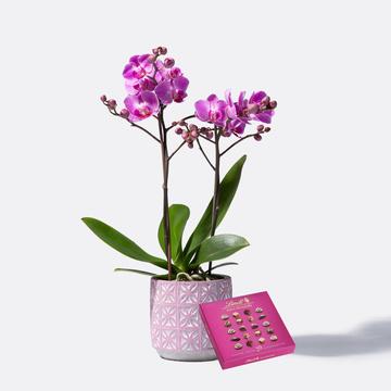 Orchidee in Pink mit Keramik-Übertopf mit Lindt Mini Pralinés