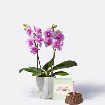 Orchidee in Rosa mit Geburtstagsküchlein mit Kerze