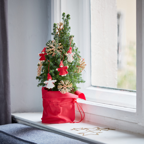Weihnachtsbaum mit Schmuck mit Hachez Frohes Fest