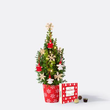Weihnachtsbaum ca. 40 cm mit Schmuck mit Hachez Frohes Fest