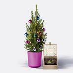 Weihnachtsbaum  Weihnachtsbaum ca. 40 cm mit Schmuck mit Winterlicher Sachertorte