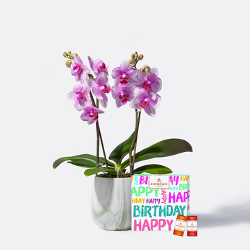 Orchidee in Rosa mit Niederegger Klassiker Happy Birthday