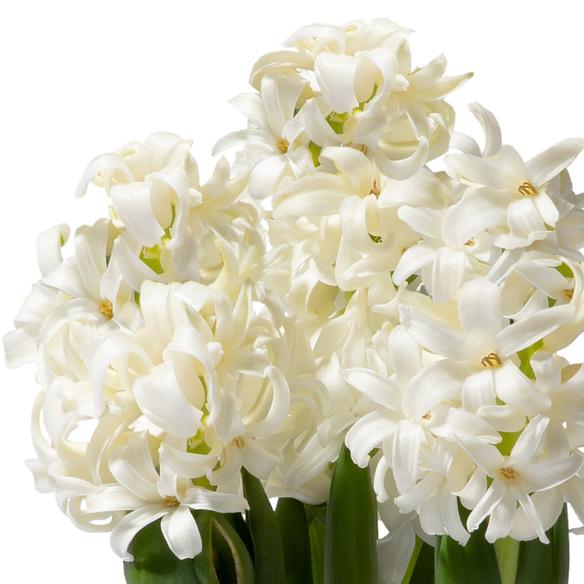 Hyazinthe in Weiß mit Übertopf mit Lindt Süße Grüße