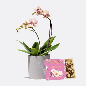 Orchidee mit Kolibri-Übertopf mit Lindt Süße Grüße