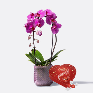 Orchidee in Lila mit Übertopf mit Lindt Lindor Herz