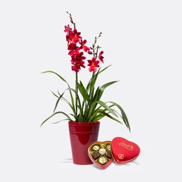 Duft-Orchidee in Rot mit Übertopf mit Lindt Herz