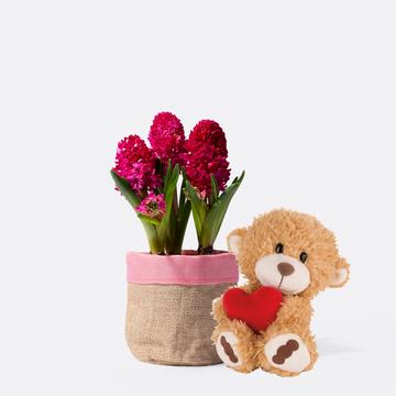 Hyazinthe in Rot mit Übertopf mit Nici Teddy mit Herz