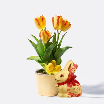 Ostertulpen mit Übertopf mit Lindt Goldhase Blumen Edition