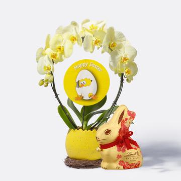 Oster-Orchidee mit Übertopf mit Lindt Goldhase Blumen Edition