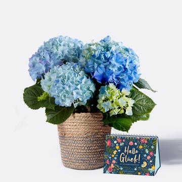Hortensie in Blau mit Korb mit Aufstellbuch Hallo Glück – Zeit für Wohlfühlmomente