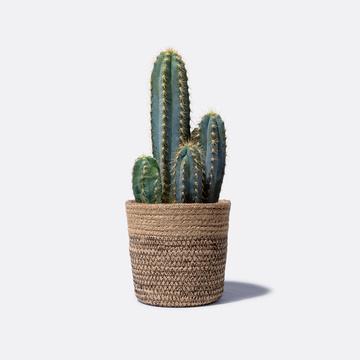 Kaktus mit Korb