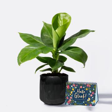 Banana Plant mit Keramikübertopf mit Aufstellbuch Hallo Glück – Zeit für Wohlfühlmomente