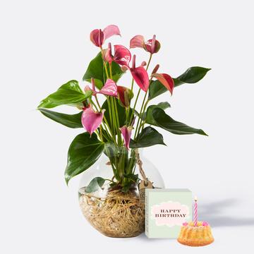 Flamingoblume Water Plant in Pink mit Glas-Kugelvase mit Sommer Geburtstagsküchlein mit Kerze