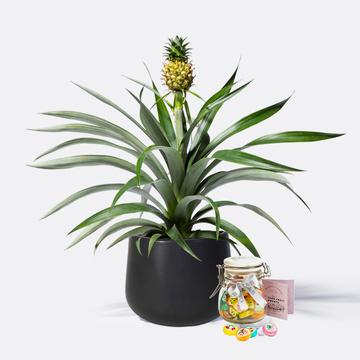Ananas mit Keramik-Übertopf mit Sommerlichen Fruchtbonbons
