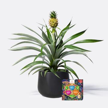 Ananas mit Keramik-Übertopf mit Niederegger Herzen Mix