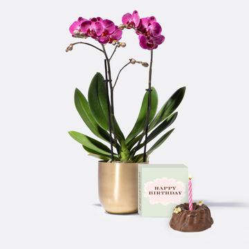 Goldzauber Orchidee in Pink mit Übertopf mit Geburtstagsküchlein mit Kerze