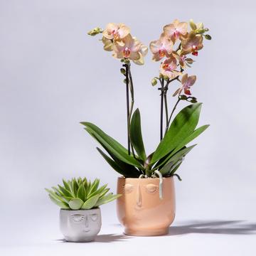 Orchidee in Orange mit Keramik-Übertopf und Mini Grünpflanze 2er Set