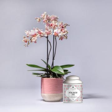 Orchidee Spring mit Übertopf mit Tafelgut Tee für Dich