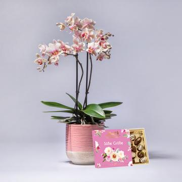 Orchidee Spring mit Keramik-Übertopf mit Lindt Süße Grüße