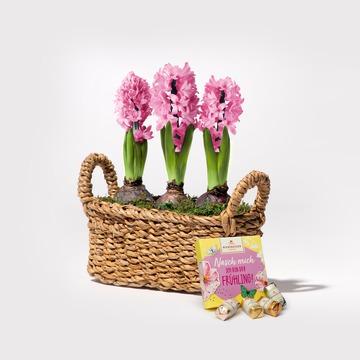 Hyazinthen in Rosa mit Korb mit Niederegger Frühlings Mix
