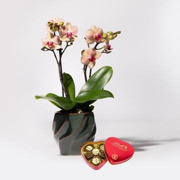 Orchidee in Orange mit Keramik-Übertopf mit Lindt Herz