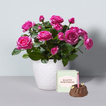 Topfrose in Pink mit Keramik-Übertopf mit Geburtstagsküchlein mit Kerze